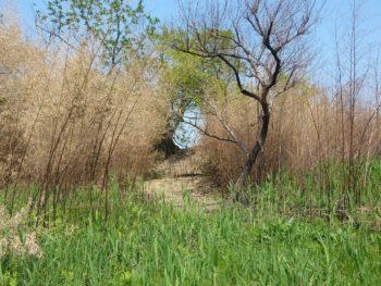 スタッフにより竹が刈り払われた大榎への入口